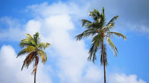 Two big palm trees background the blue sunny sky