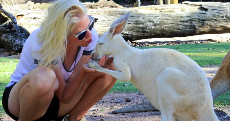 Young blonde caucasian woman kissing Kangaroo at park in Whiteman, near Perth, Western Australia. Female tourist interacting with kangaroo during an encounter with wildlife.
