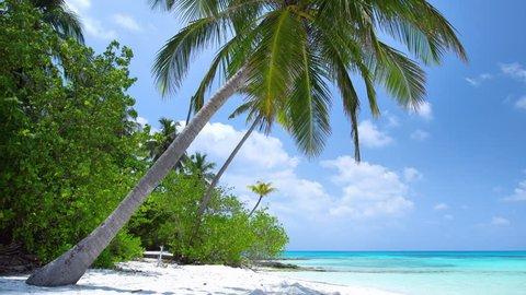 Tropical beach with coconut palm trees, Maldives travel destination