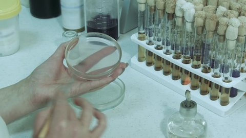 Petri dish is filled with a layer of nutrient medium. The lab assistant in a petri dish cultivates colonies of microorganisms. Sowing culture of microorganisms. Conducting research in the laboratory.