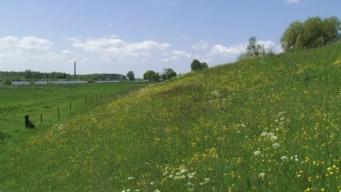 Buttercup and cow parsley, blooming roadside flora on the slope of a river dike + pan car passing.  IJSSEL, THE NETHERLANDS
