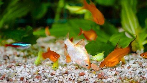 Feeding the fish in the aquarium