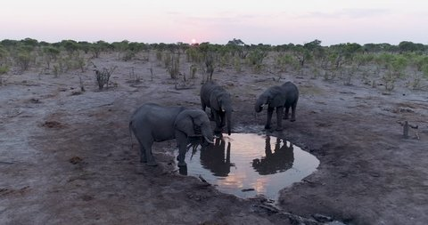 Aerial view of three elephants at sunset drinking infront of the underground photography hide at Hyena Pan, Khwai Private Reserve, Botswana