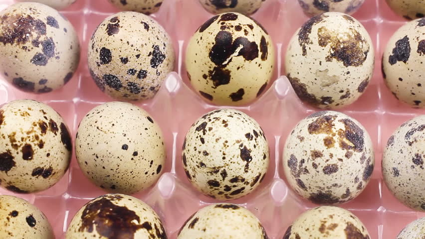 Quail easter eggs on pastel pink background. | Shutterstock HD Video #1007062291