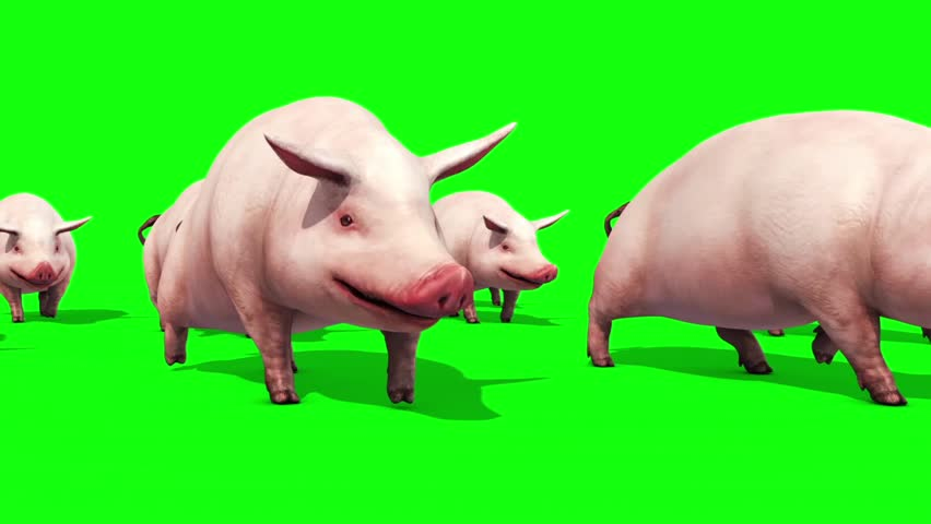 an analysis of pigs in animal farm Find a summary of this and each chapter of animal farm lit/animal-farm/ footnote course hero, animal farm analysis the scope of the pigs.