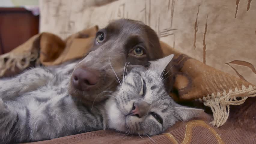 cat and a dog are sleeping together funny video. cat and dog friendship indoors #1007292391