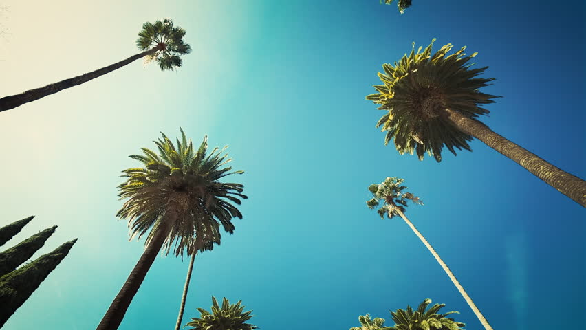 Palm trees passing by a sunny clear sky. Driving through the sunny Beverly Hills. Los Angeles, California.  | Shutterstock HD Video #1007415151