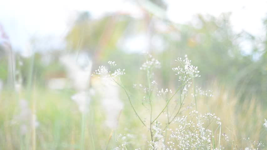 lens flare over the grass in nature with warm tone