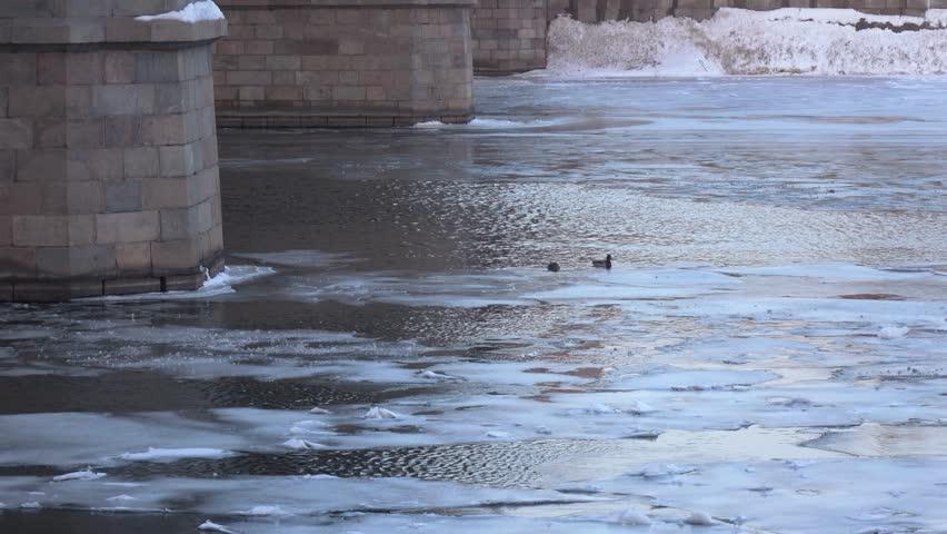 Floating ducks near the bridge supports | Shutterstock HD Video #1007585251