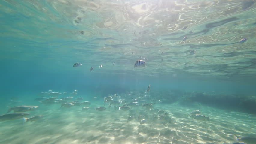 Underwater shooting. Large number of different fish float at the bottom of the sea. The rays of the sun fall into the lens through the thickness of the water.   Shutterstock HD Video #1007709166