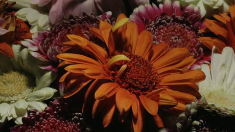 Medium close up motion time lapse shot circling around the center of a bouquet of different colored gerbera daisy flowers while blooming and dying.