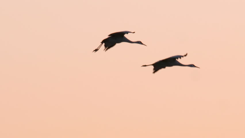 This is a shot of two Sandhill Crane flying During Sunset in the wetlands of NM's Bosque Del Apache Shot on a GH5