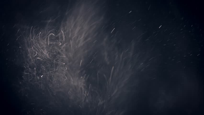 Dust Particles. Natural Floating Organic Particles On Black Background. Glittering Sparkling Particles With Bokeh. With Fast and Slow motion. | Shutterstock HD Video #1008093511