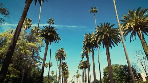 Palm trees passing by a blue sky. Driving through the sunny Beverly Hills. Los Angeles, California.