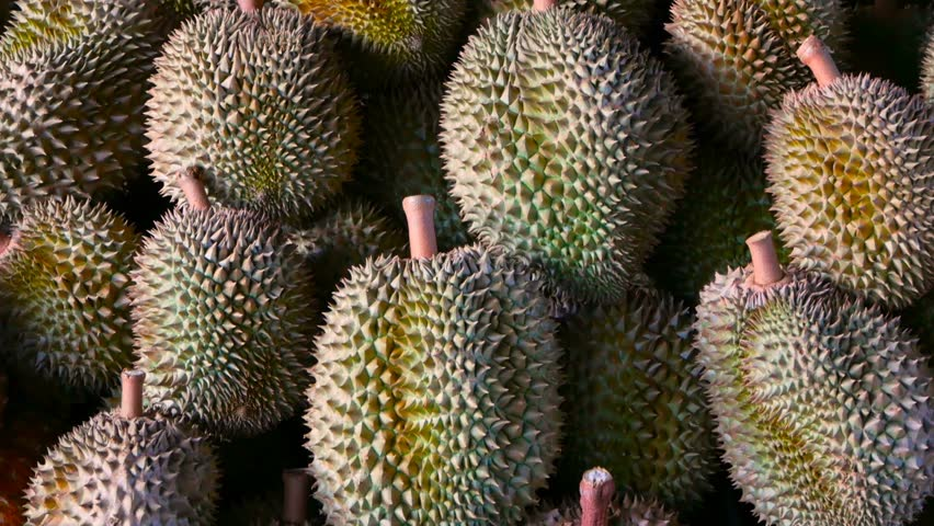 Asian king of fruits Durian is on the counter in the night market in Thailand. Durians are very large and the price is expensive. Exotic tropical fruit with green and prickly flesh has unusual taste.