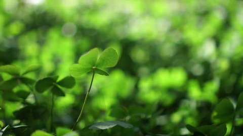 green clover field green lucky background