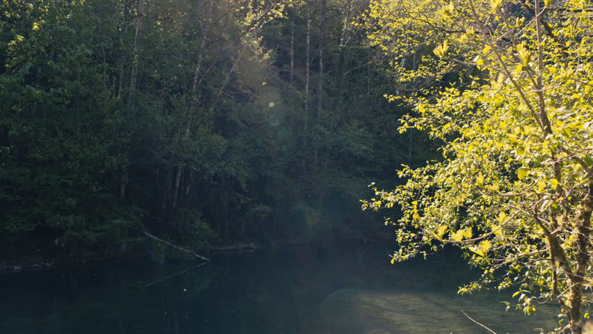 Peaceful river on the middle on a forest | Shutterstock HD Video #1008398641