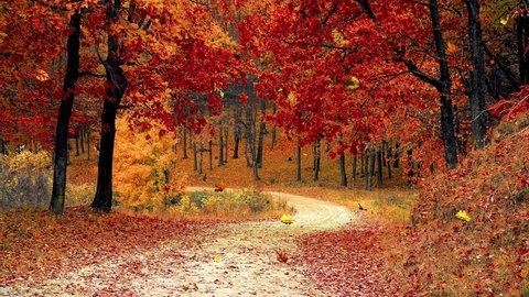 Colorful falling autumn leaves overlay image of dirt path wooded forest trail