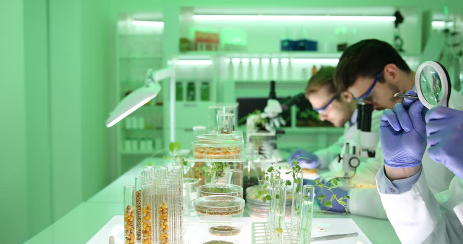 an examination of genetically engineered plants Start studying microbiology-biotechnology & dna ch 9 learn these pathogen proteins are being produced by genetically engineered plants have toxin.