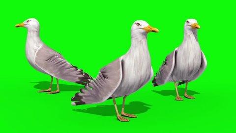 Three Seagulls Green Screen Close 3D Renderings Animations