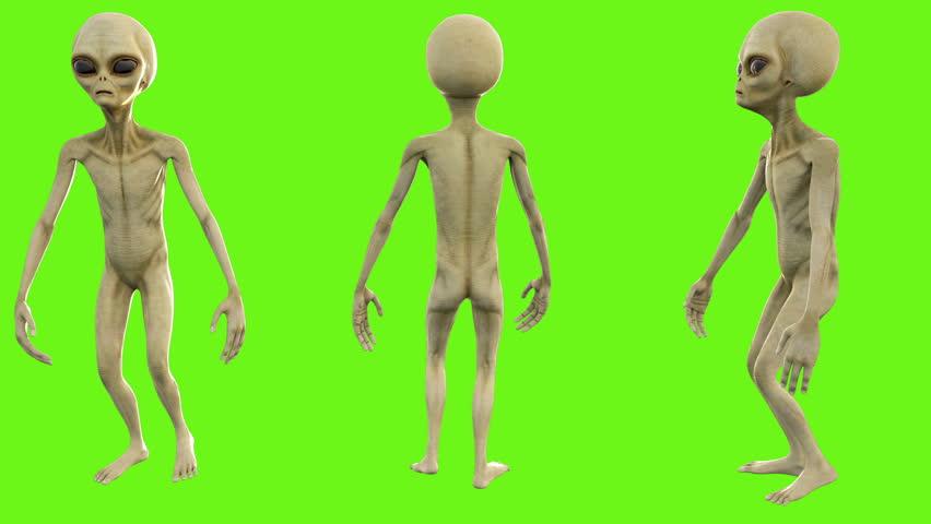 Alien walks. Loopable animation on green screen. 4k.
