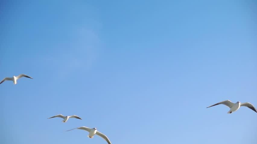 Bird Animal Seagulls Flying