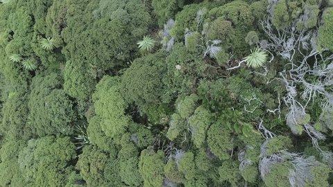 Aerial: Native New Zealand bush. Punga & Manuka Trees, Auckland, New Zealand