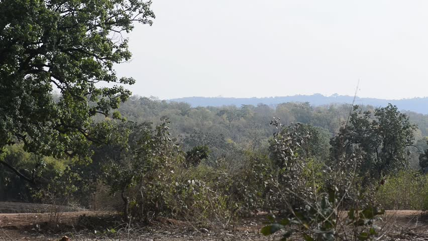 forest landscape in national park in india