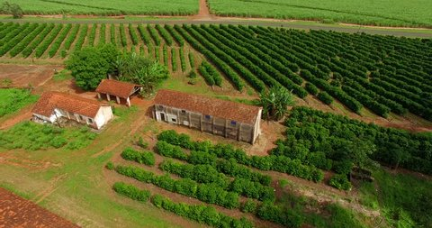 Very simple house, coffee plantation and chicken coop on a farm in Brazil
