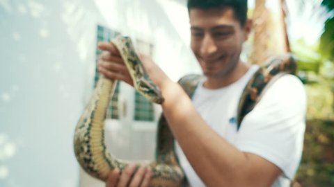 An attractive young male tourist smiles while holding an adult Burmese Python in his hands and around his neck