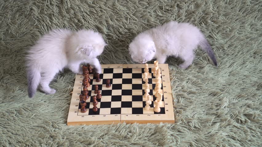 two cute kittens - grandmasters playing chess on the couch.