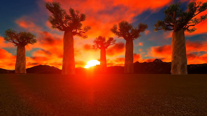 Baobab Trees In African Sunset