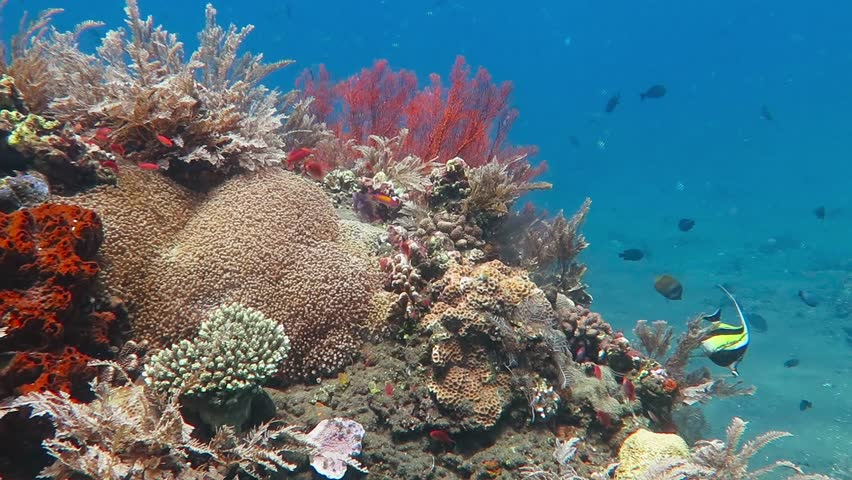 Underwater exotic coral reef with fish. Snorkeling on the colorful tropical reef with variety of marine wildlife. Scuba diving, tropical seascape.
