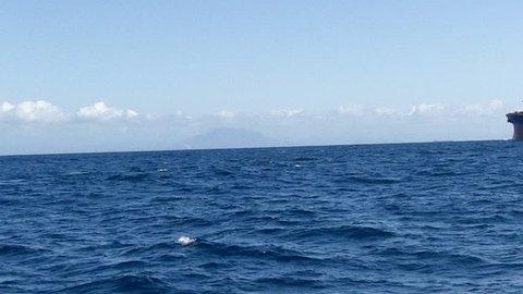 Humpback Whale (Megaptera novaeangliae) swim in bay of Vitória, Espírito Santo, Brazil. Ship passes to the bottom.
