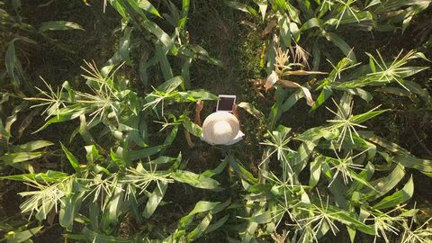 Farmer at Organic Farm Field Checking Corn Quality Using Mobile Tablet Gadget. 4K Aerial. Future Technology Agricultural Food Harvest Footage Concept.