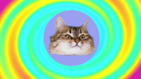 cat tries on the pink sunglasses on rainbow gradient background