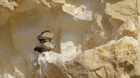 Griffon vultures mating on cliff, Ein Avdat, Israel