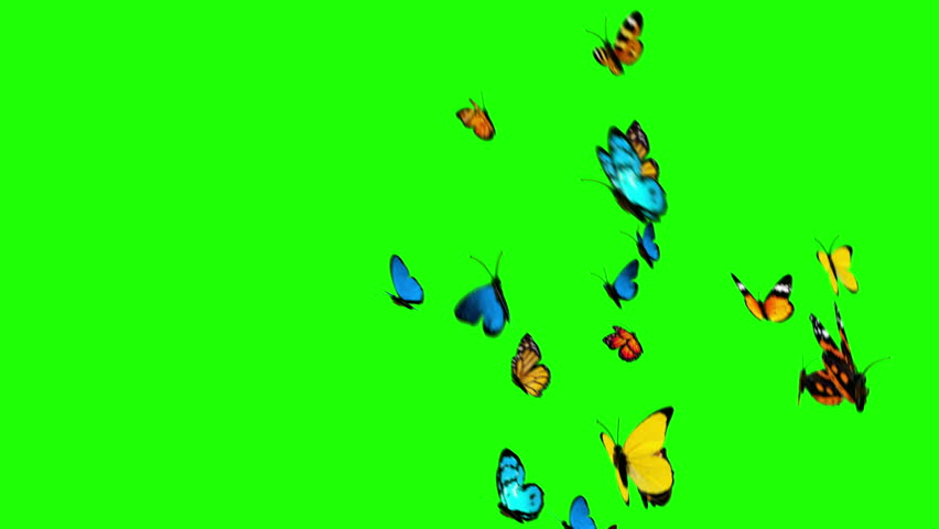 Butterflies Flying on a Green Background. 3d animation, 4K