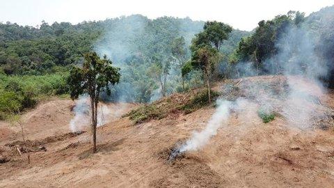 Deforestation. Destruction of rainforest (rain forest) in Southeast Asia