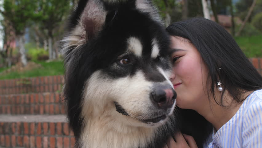 Close up of one young Chinese woman holding her dog and kiss outdoor in the park, 4k slow motion | Shutterstock HD Video #1009584041