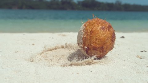 SLOW MOTION, CLOSE UP, LOW ANGLE: Wet hairy coconut falls onto white sandy beach near beautiful ocean. Grains of sand stick to wet coconut rolling along sandy tropical coast in the Pacific Islands.