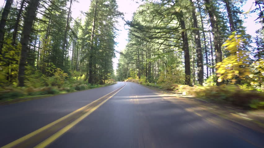 Driving Down Empty Road, During Autumn In Oregon, Usa | Shutterstock HD Video #1009971791