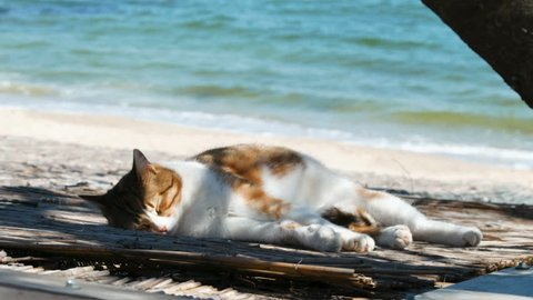 ff4c6c1e4481 ... wearing sunglasses relaxing in the sea . Red cat eats watermelon and  dog eats ice cream. Motion Photo. Stray tricolor cat sleeping on a sea  coast beach