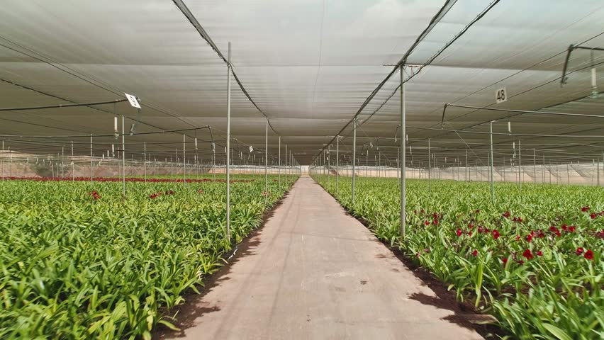 Aerial footage from inside a large greenhouse with flowers | Shutterstock HD Video #1010345111