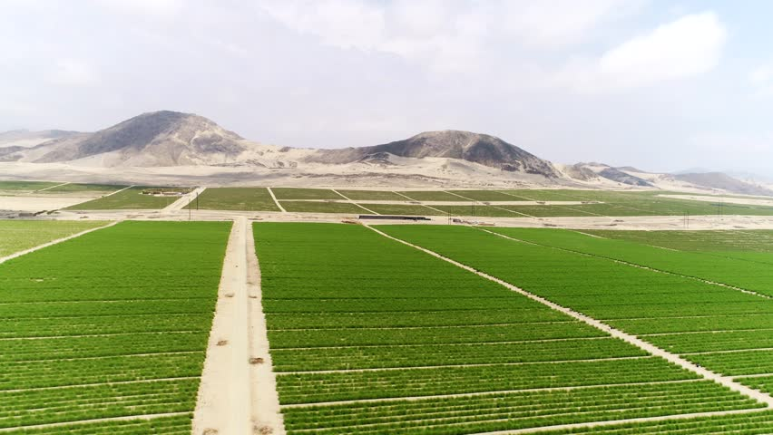 Aerial of asparagus fields in a desert in Peru, South America