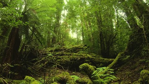 Giant fallen log surrounded by moss, ferns, and trees - Growling Swallet Track, Tasmania, Australia