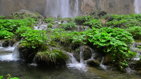 Green plants of coltsfoot and crystal clear water at Plitvice lakes natural reserve in Croatia