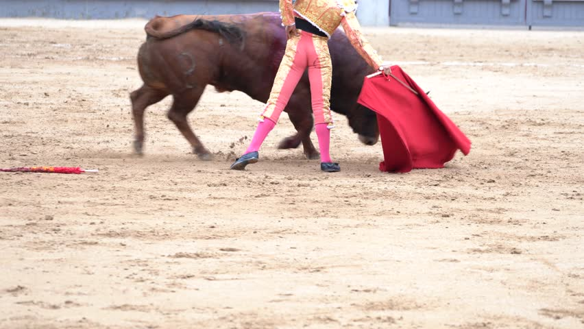 Man bullfighter dressed in bullfighting costume.