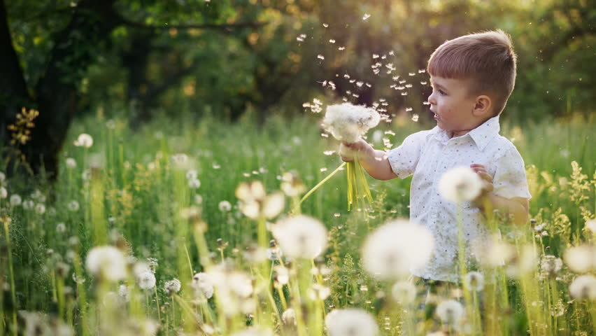 Little boy playing with dandelions in nature. Funny grimace. Slow motion