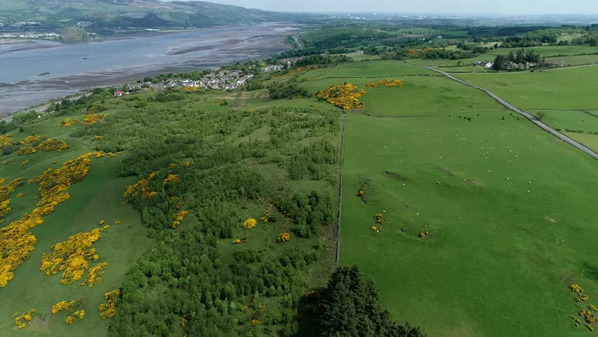 Aerial footage over woodland, yellow gorse covered hillside and green fields with grazing sheep and cattle to the village of Langbank on the south shore of the Firth of Clyde.